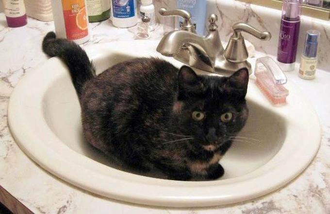 049 Любителям кошек