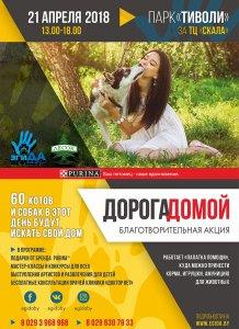 60 котов и собак будут ждать своих хозяев на благотворительной выставке «Дорога домой»