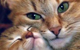 Мы в ответе за тех, кого приютили: как в Минске отметят Всемирный день защиты животных