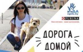 В Минске более 60 бездомных животных найдут свою «Дорогу домой!»